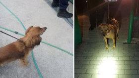 Takhle se zbavovali psů v Mostě: Uvázali je různě po městě a ponechali osudu
