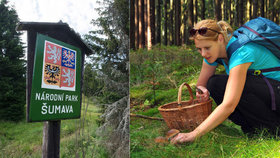 Turisté a houbaři, pozor: Národní parky mají nová pravidla, zavedou zóny klidu