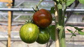 Vychytávky Ládi Hrušky: Vyrobte si opěrku ke keříčkovým rajčatům