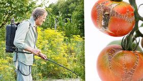 Plísně jsou postrachem zahrádkářů! Které druhy mohou ohrozit vaši zeleninu?