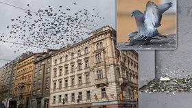 Krmič holubů brutálně napadl mladíka v Litvínově: Zbil ho a vyhrožoval mu smrtí