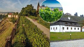 Pražské vinice se o víkendu poprvé otevřou lidem: Městské i ty soukromé