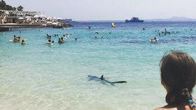 Panika na dovolené: K pláži na Mallorce znovu připlul žralok, zranil turistu