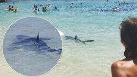 Panika v dovolenkovém ráji: Žralok se objevil na pláži na Mallorce