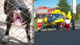 Dominiku (1) pokousal pes uvázaný u plotu: Holčička bojuje o život!