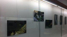 Výstava fotek v knihovně Opatov: Petr Tesař ukazuje Tajemnou přírodu