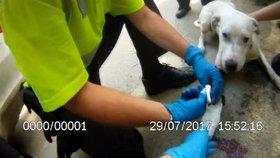 Dojemné video: Strážníci zachránili pořezaného psa. Vykrvácel by, potvrdil veterinář