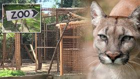 Válka s ilegální zoo, z které utekla puma: Starosta Zvole začal rázně jednat