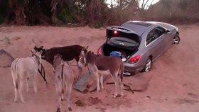 Pašeráci zapřahají kradená auta za osly. Nestartují, aby nespustili GPS
