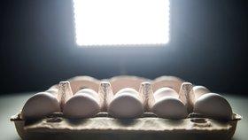 Pokračování vaječného skandálu: O látce, která otrávila vejce, vědí od začátku června