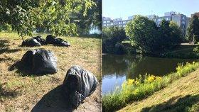 Hnilobný zápach u rybníka v Čimicích: V pytlích tu leží ryby, které ve vedru uhynuly