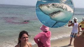 Žralok zaútočil přímo u plné pláže: Před lidmi roztrhal tuleně!