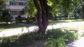 Hodiny ležel zraněný ve křoví: Muž (40) se opil po hádce s přítelkyní a spadl ze stromu ve Stodůlkách