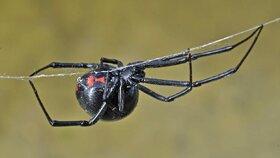 Pavouci jsou vlivem tropických bouří agresivnější, podle studie lépe čelí počasí