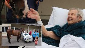 Umírajícímu muži (87) splnili poslední přání. Přiklusal se za ním podívat kůň