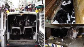 130 koček v mrňavém bytě! Šílená majitelka skončila na psychiatrii, zvířata hledají nové majitele