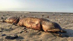Příšera z hlubin: Hurikán Harvey vyvrhl na pláž pravěké monstrum bez očí