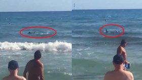 Čelisti a křik na španělské pláži. K turistům připlaval 2,5metrový žralok