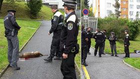 Hrdina v Jablonci odlákal agresivního psa od dětí: Skončil pokousaný, policie zvíře zastřelila