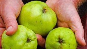 A znovu Polsko. Jablka obsahují pesticidy, inspekce nařídila ovoce stáhnout