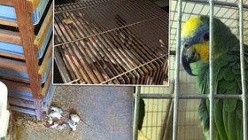 Zvířata zabíjeli úderem o zem: Bývalá zaměstnankyně Pet Centra popsala podmínky ve firmě