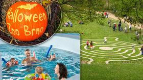 Nevíte, co s dětmi podniknout o podzimních prázdninách? Vyzkoušejte třeba tohle!