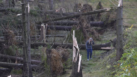 Vichřice má čtvrtou oběť. Zemřel houbař, na kterého spadl strom v lese