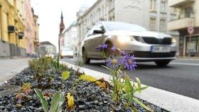 Hříšní řidiči v Dolních Počernicích: Auta parkují na trávě. Hrozí vám pokuty, varuje radnice