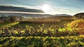 Svatý Martin klepe na dveře: Jak poznat dobré svatomartinské víno?
