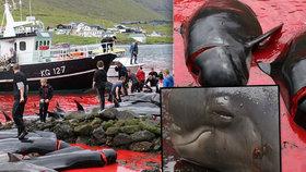 Masakr velryb zbarvil moře do ruda: Kytovce porcují i malé děti