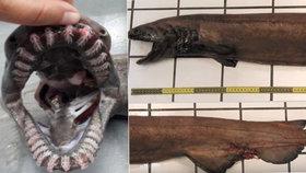 Rybář omylem chytil prehistorického žraloka. Má 300 zubů a pamatuje dinosaury