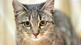 Obec chce lidem zakázat chovat kočky. Místní si zoufají ze ztráty mazlíčků