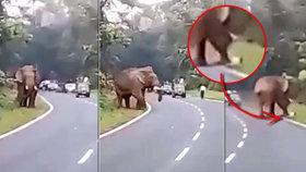 Děsivé video: Muž se chtěl vyfotit se slonem, skončil ušlapaný!