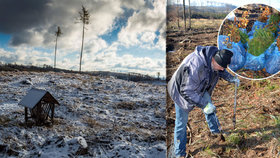 Zdevastované Jeseníky: Dělníci zalesňují holé pláně, dochází ale sazenice a bude mrznout