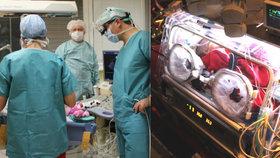 Nemocnou Emičku (4 měsíce) zachránili pražští lékaři: Do Česka ji převezla armáda