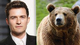 Medvěd, který učaroval Orlandu Bloomovi: V liptovské ZOO mají seriálovou hvězdu
