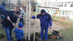 Orkán Herwart »pokosil« v Praze 4 desítky stromů. Radnice je vrátí zpět