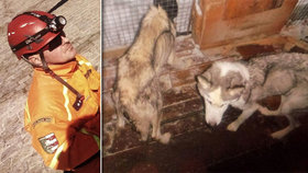 Záchranář týral své dvě fenky, dostal podmínku: Eliška a Sindy už mají nový domov
