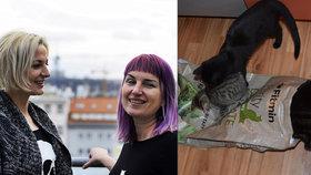 Očkování, krmení nebo škrabadlo: Františka s Lenkou plní přání kočičím bezdomovcům