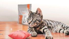 Co do kočičí misky rozhodně nepatří