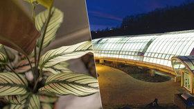 Zážitek pod stromeček? Botanická zahrada láká na dárkové poukazy a zve na poslední dny výstavy