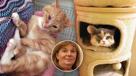 """Dana (57) provozuje """"kočičí depozitum"""". Opuštěné kočky žijí v desítkách pražských bytů"""