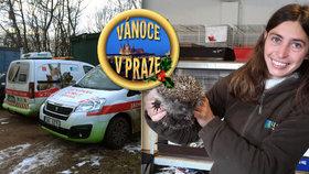 Zuzana ze záchranné stanice v Jinonicích: Zvířata svátky nerozlišují, fungujeme nepřetržitě