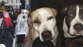 Smutný konec pátrání po ztracených psech z Volárny: Arga našli zabitého