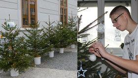 Lesníci darovali dětem 400 stromků. Dětský domov má víc peněz na dárky