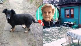 Nejbojácnější pes v Praze: Mamušu už 14 let nikdo nepohladil. Lidem nevěří, když byla březí, hodili ji přes plot