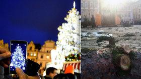 Vánoční strom na Staromáku už není: Rozřezali ho na kusy. Větve »sežerou« zvířata v pražské zoo