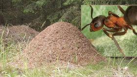 Mravence čeká stěhování: Kvůli modernizaci tratě Brno – Přerov je vybagrují a přesunou jinam