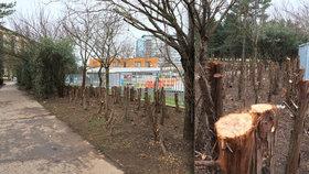 U koupaliště na Ládví uřezali stromy. Lidem v létě poskytovaly stín a bariéru