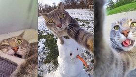 Selfie čičí: Kočka Manny ráda fotí autoportréty